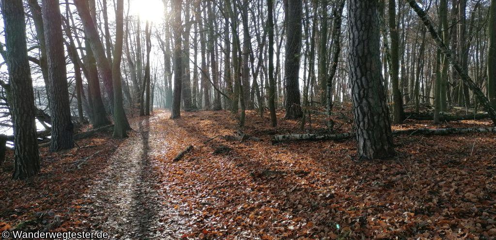 Wanderwegtester, Krossinsee Waldweg