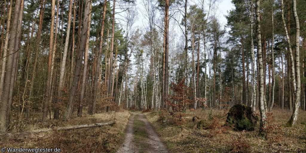 Wanderweg Wolletzsee Waldweg