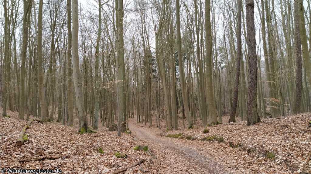 Buchenwald Grumsin