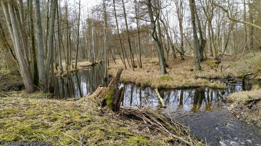 Wanderweg Wolletzsee