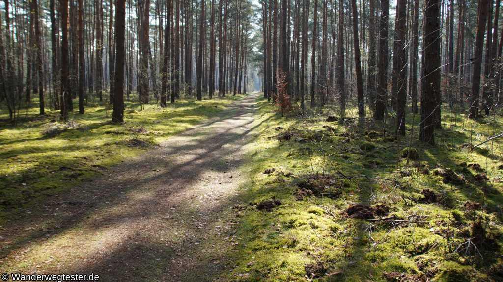 Waldweg im Müggelheimer Forst