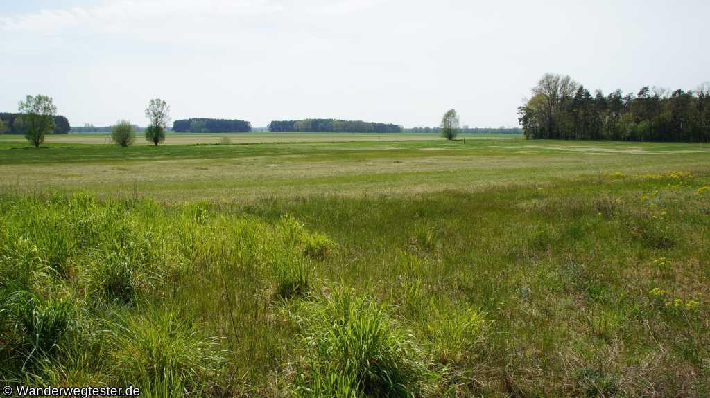 Feld am Saalower Höllenbergweg