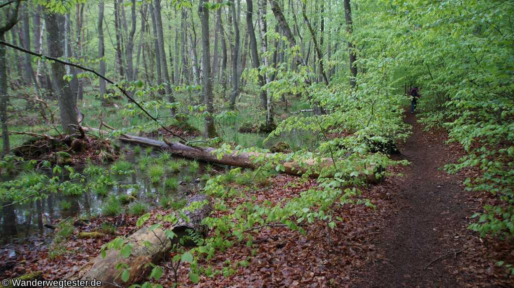 Weg zum Bachsee
